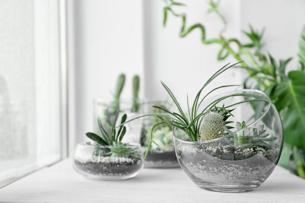 planten venster
